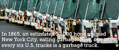 In 1865, an estimated 10,000 hogs roamed New York City, eating garbage. Now, one of every six U.S. trucks is a garbage truck.